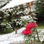 冬の京都観光カップルにおすすめのスポットは?イベントやホテルの情報も!