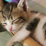 子猫を夜寝かせるには?夜泣き対策や寝室に最適な室温湿度は?