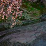 千鳥ヶ淵で夜桜を見た後の食事は?屋台は何時まで?レストランは?